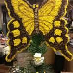 NewFuneral_YellowButterfly
